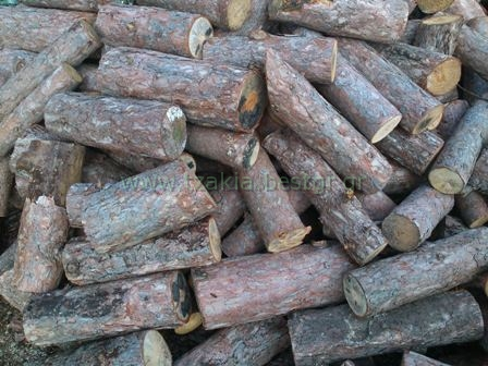Είδη ξύλων Τζακιού που πρέπει να καίμε Πεύκο